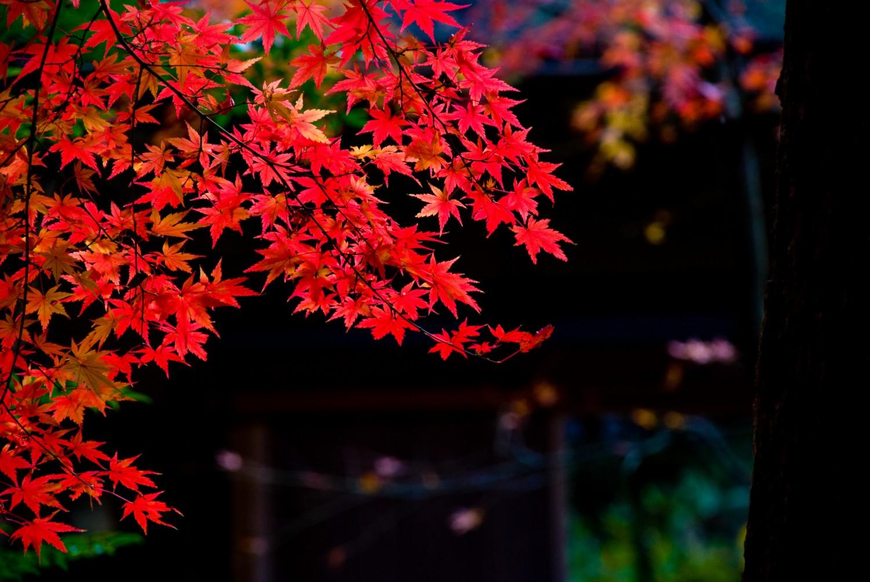 秋季彼岸会(お彼岸のお参り)